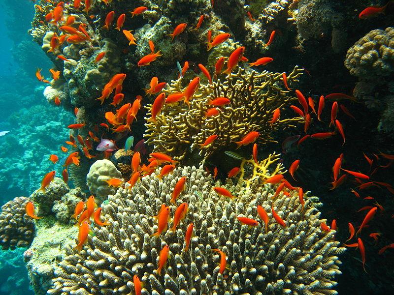 CC Observación de Arrecifes de Coral